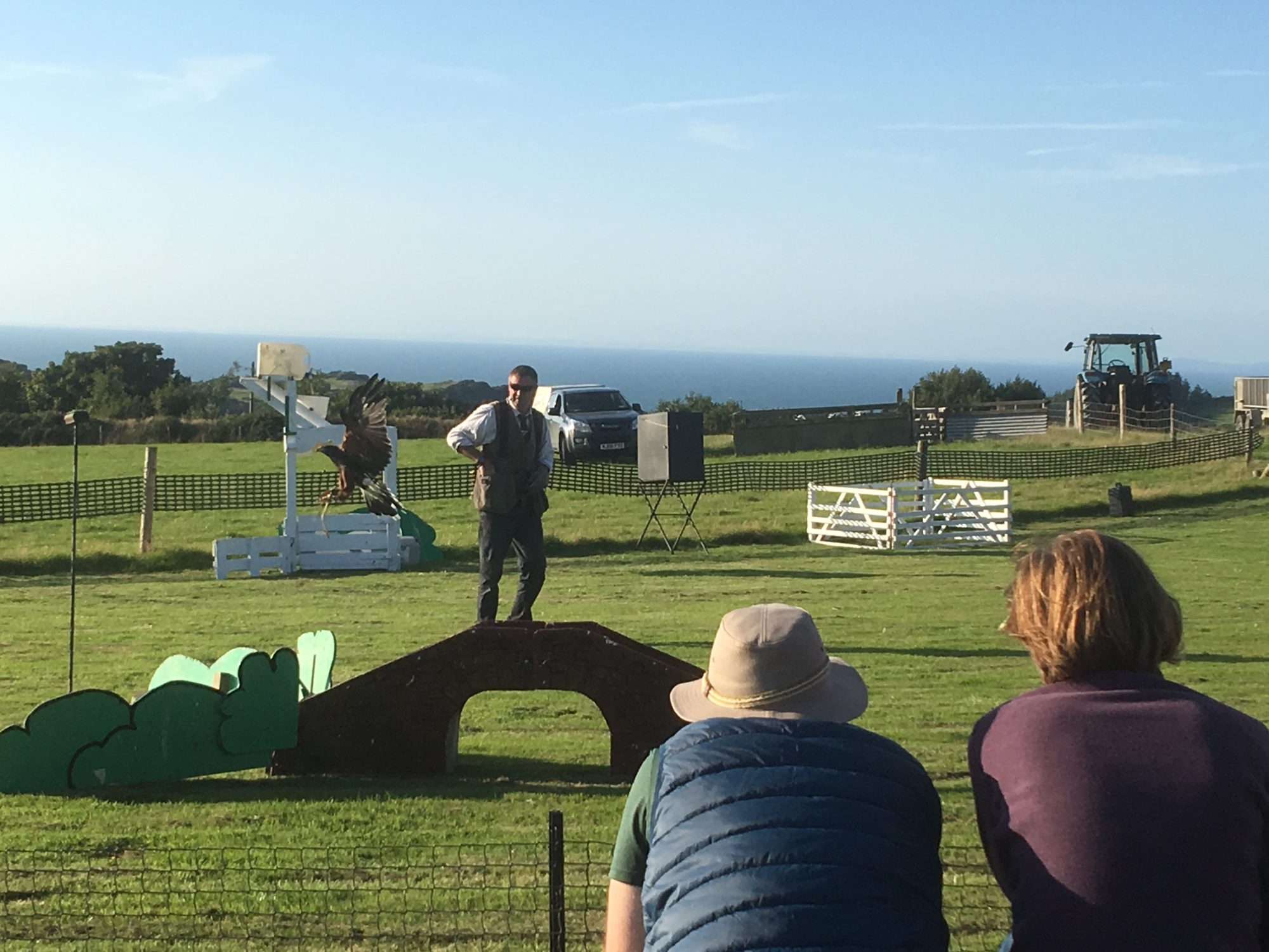 Sheepdog & Falconry display